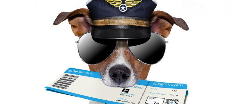 Правительство обязало туроператоров выдавать авиабилеты в обе стороны не позже, чем за сутки до отлета