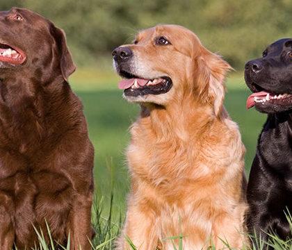 В Австралии собаки спасают от  аэрофобии